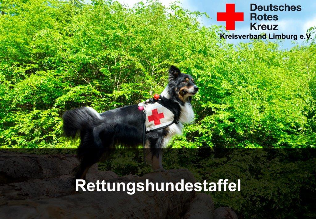 DRK Rettungshundestaffel